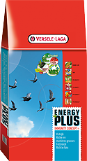 Energy Plus I.C.